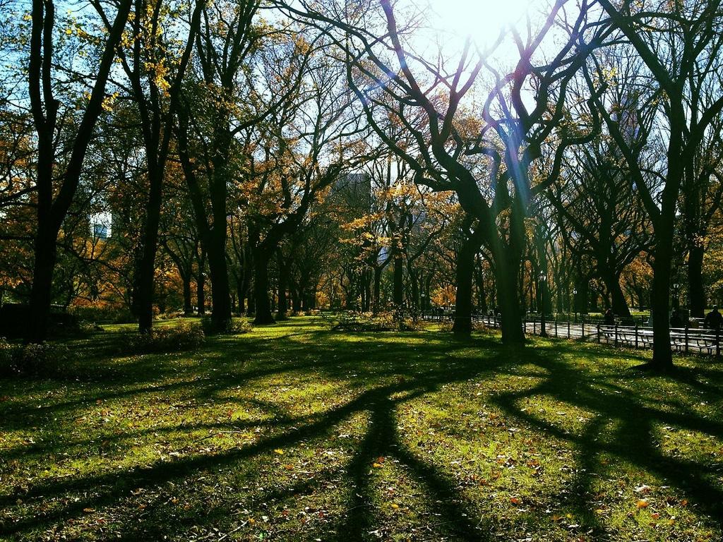 Five o'clock Park-central-park
