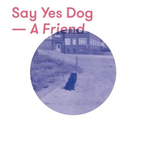 say yes dog