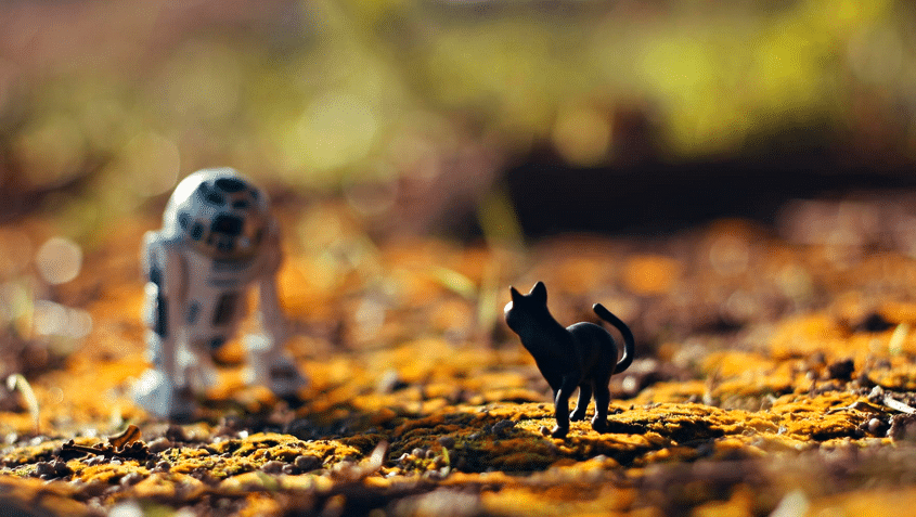 ministarwarskitty