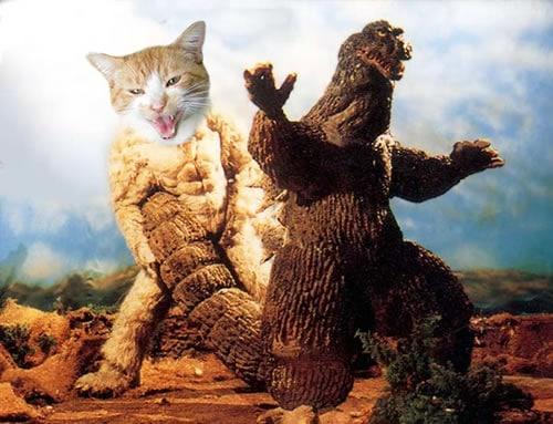 Godzilla-vs.cat_  Godzilla Versus Cats