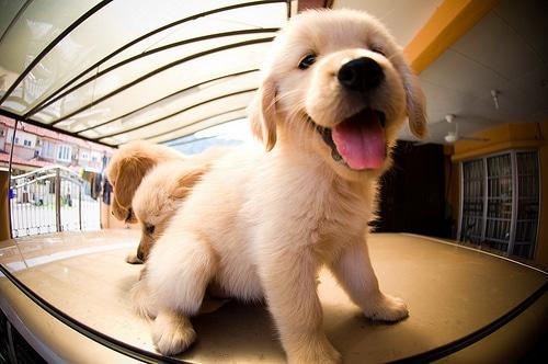 cute-dog-les-bébés-chien
