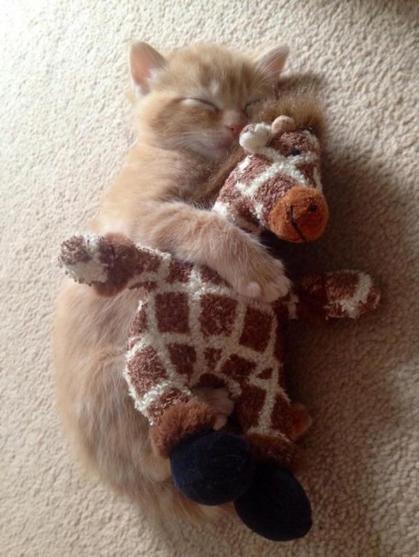 le bébé chat et la girafe